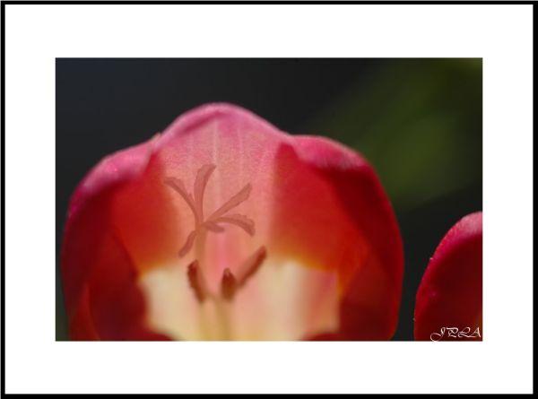 Au cœur d'un bouquet#2