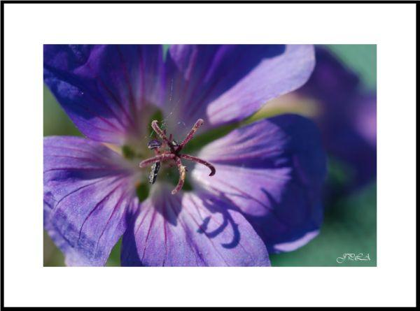 Au cœur d'une fleur
