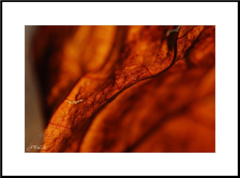 La lumière en automne #9