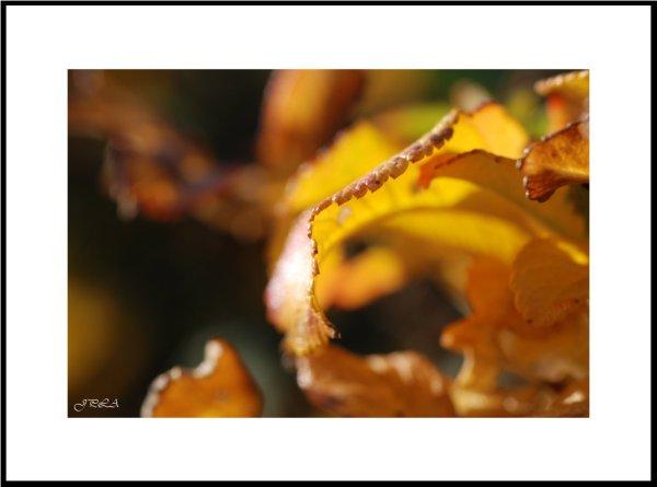 Lumière d'automne #10