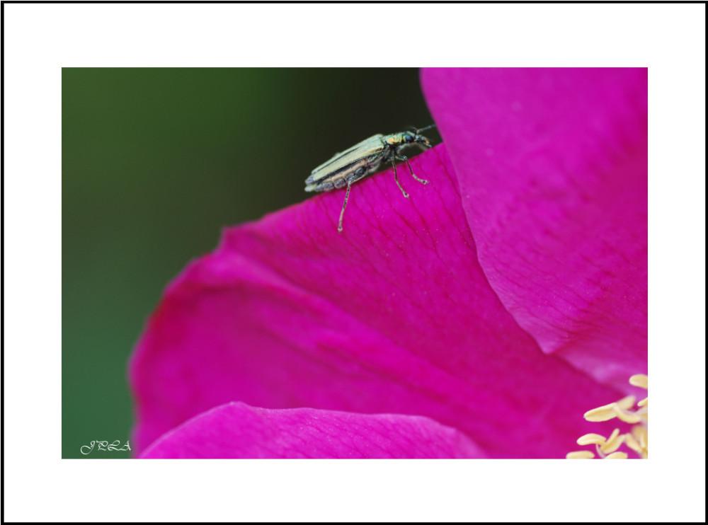 Sur une fleur #2