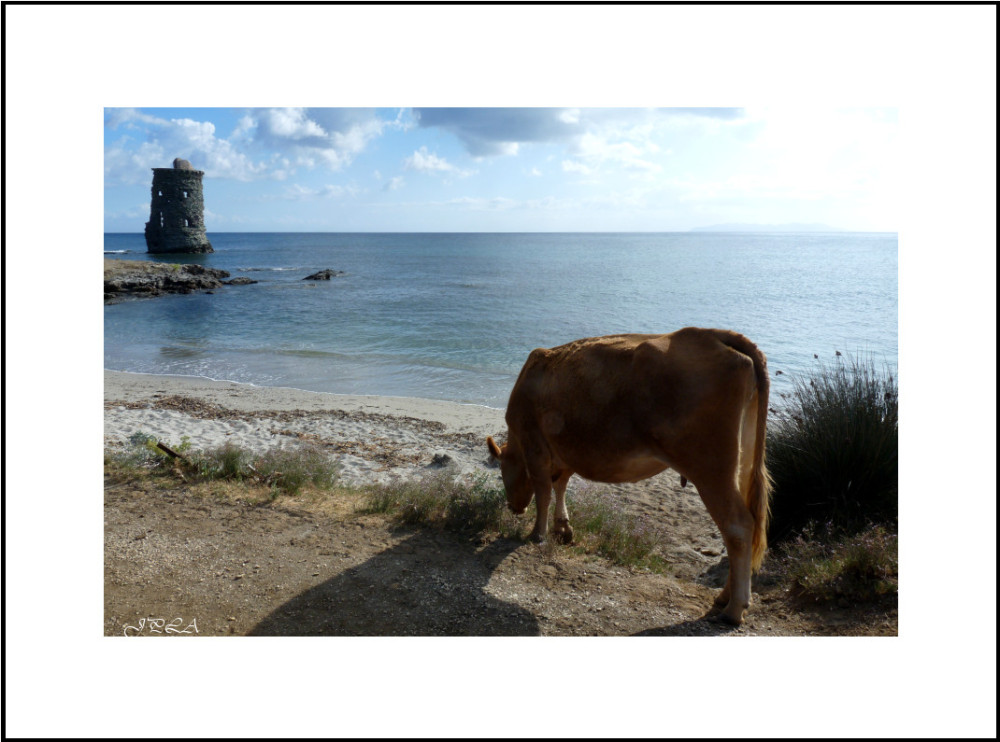 Corse 2013 #15