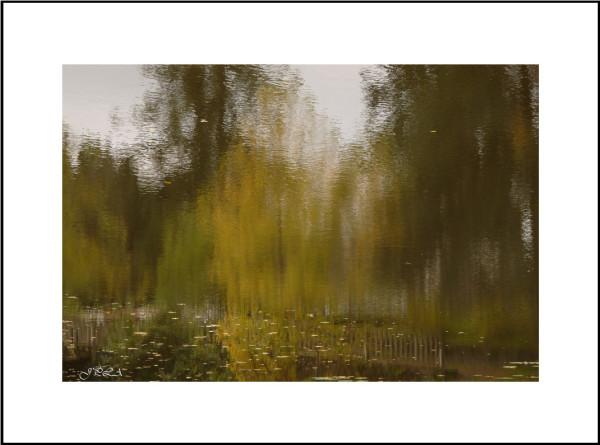 Teintes d'automne #4