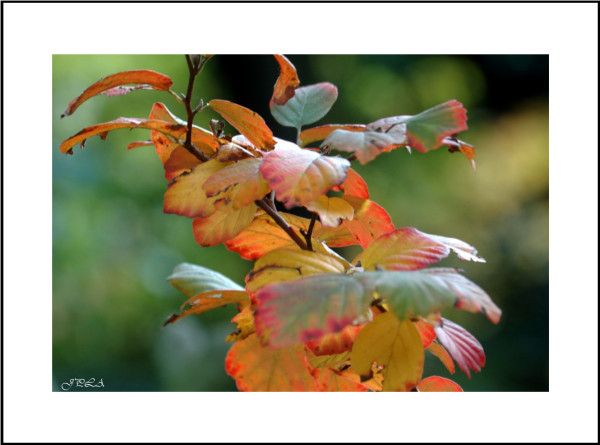 Teintes d'automne #6
