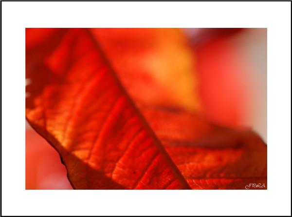 Teintes d'automne #7