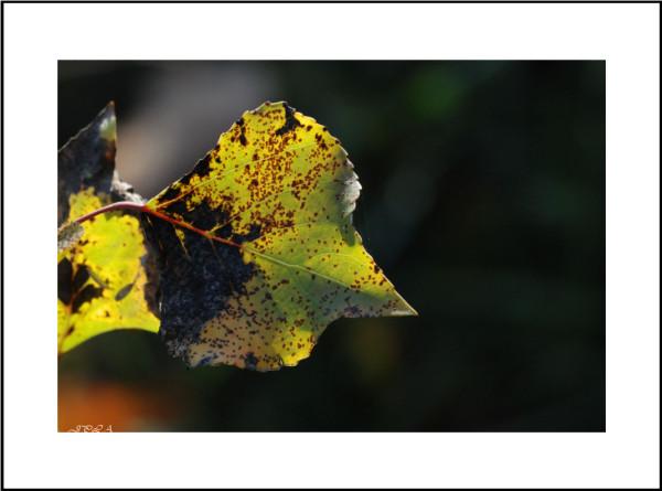 Teintes d'automne #9