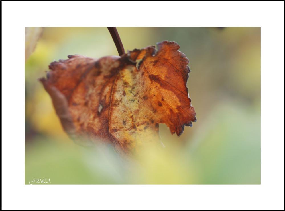 Interlude d'automne #2