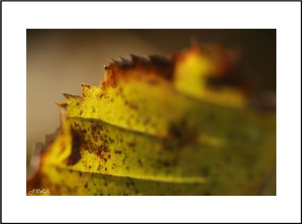 Interlude d'automne #10 et fin