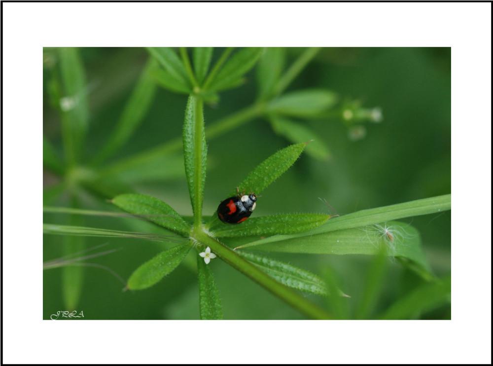Dans les herbes #3