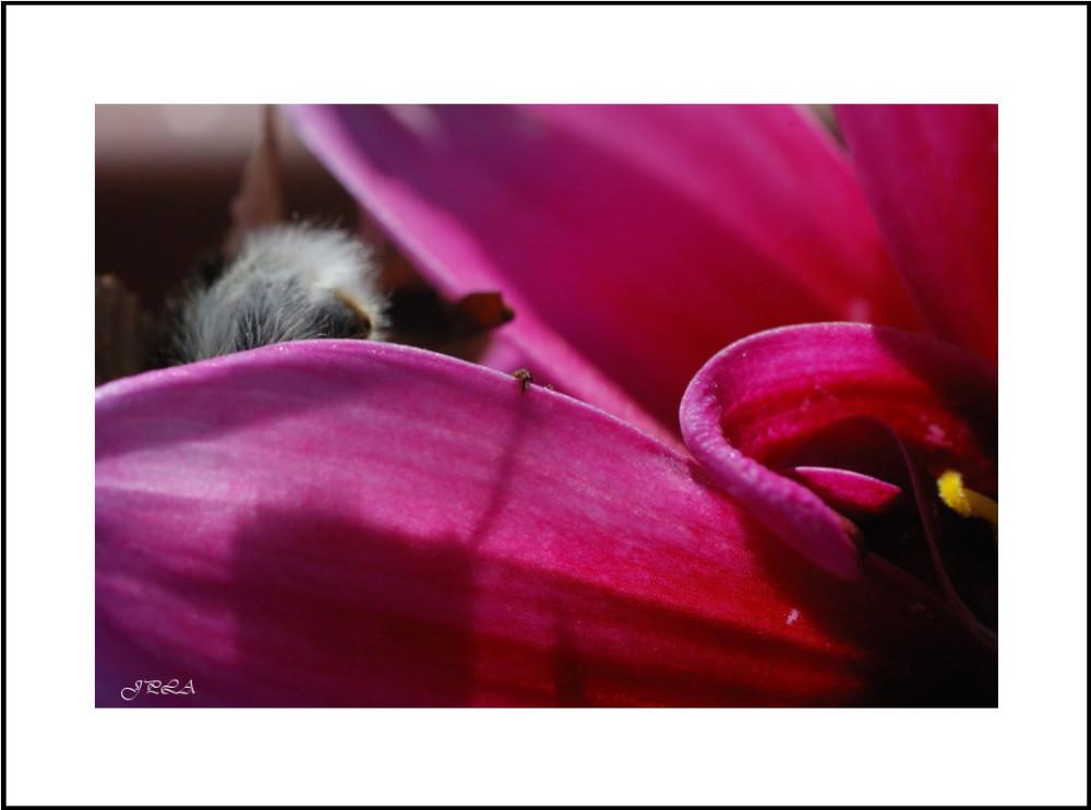 Sur une fleur #15