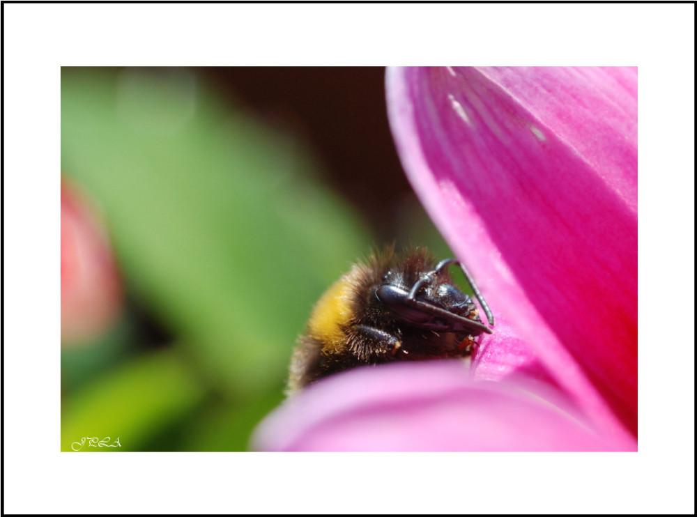 Sur une fleur #17