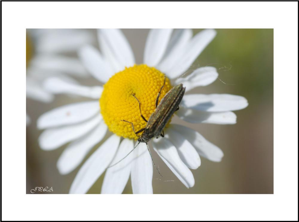 Sur une fleur #25