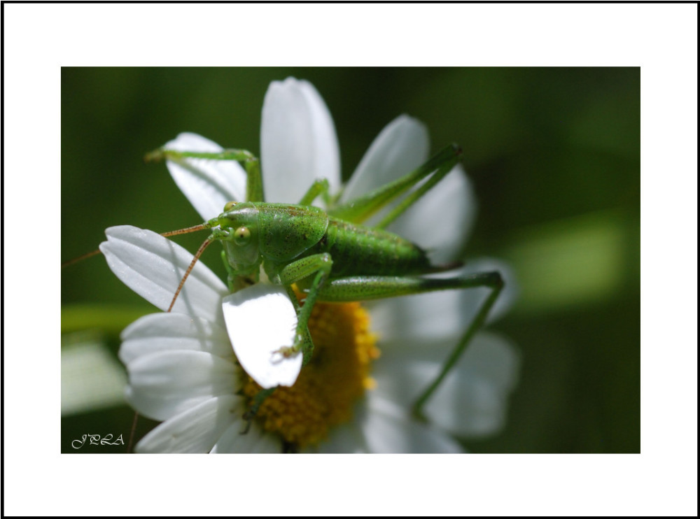 Sur une fleur #27