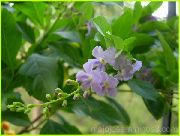 Lovely tiny flowers