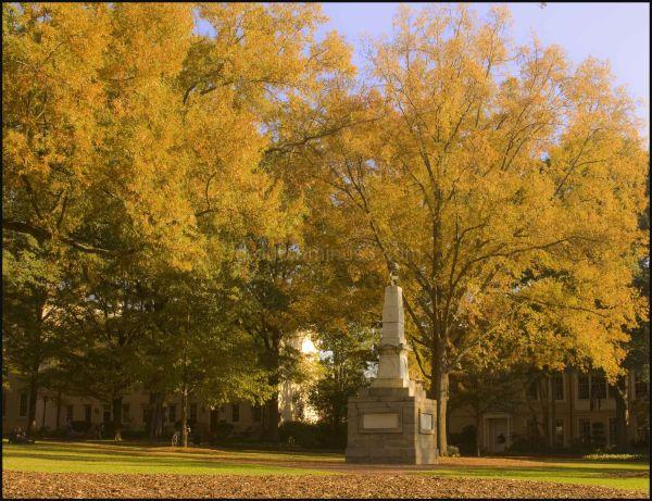 Fall Foliage #4