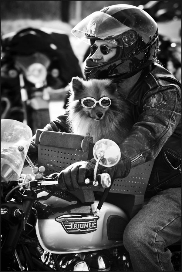 """Mr. Tucker"" likes to ride vintage motorcycles"
