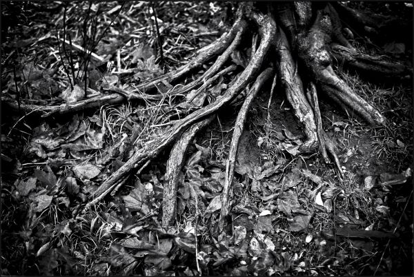 Roots take hold