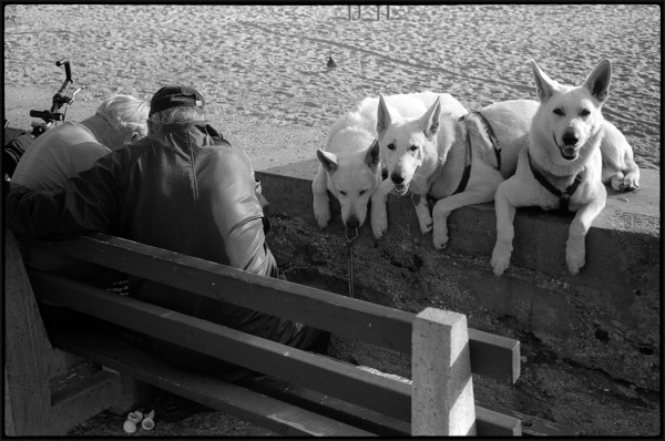 Three dogs on the boardwalk