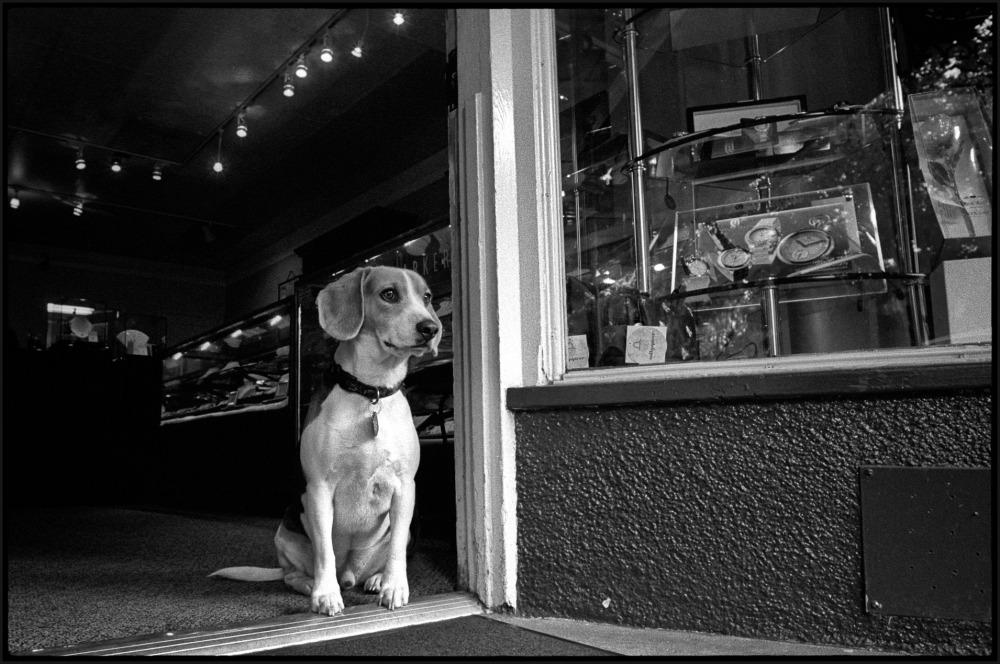 A guard dog at his post
