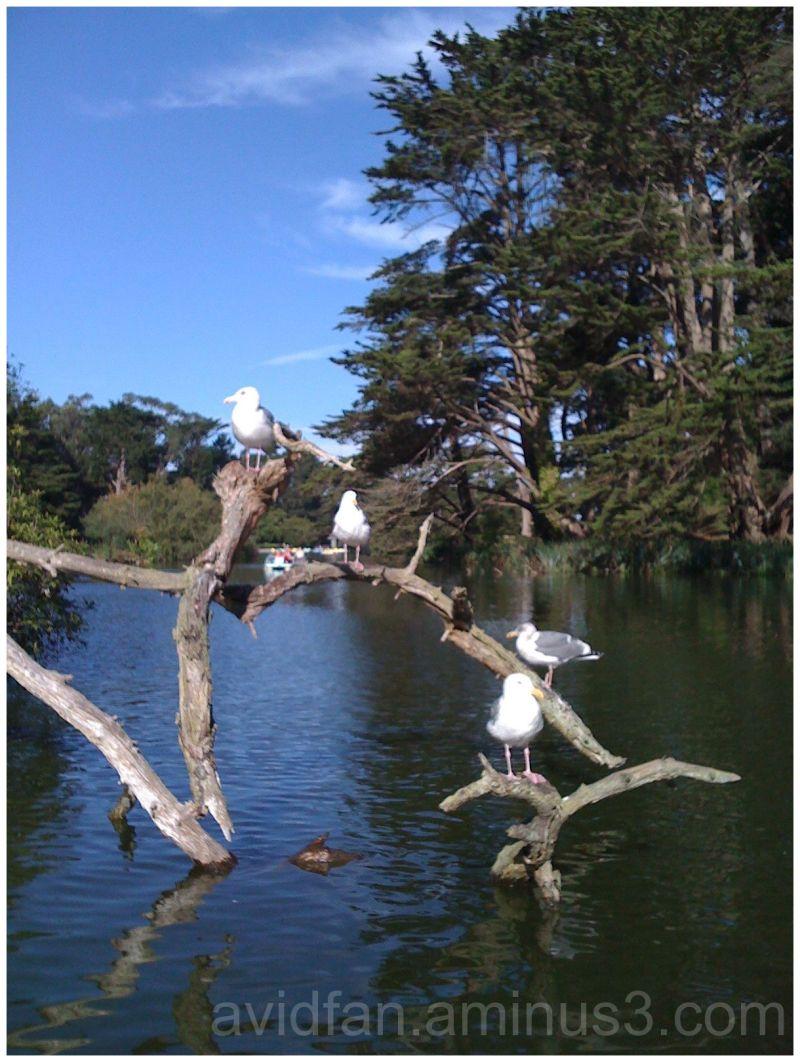 Seagull Hangout