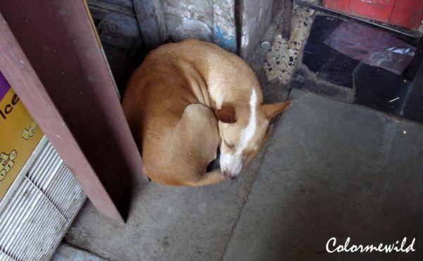 Snoring away snugly