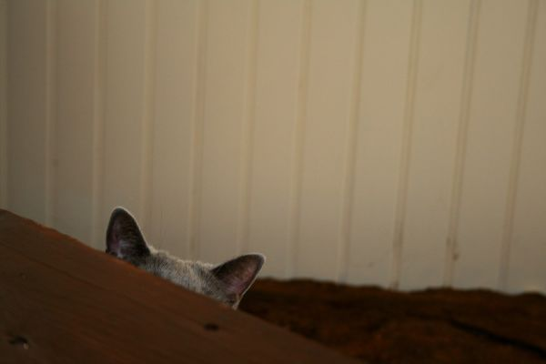 Jugar al escondite [2]