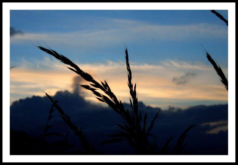 Los campos...