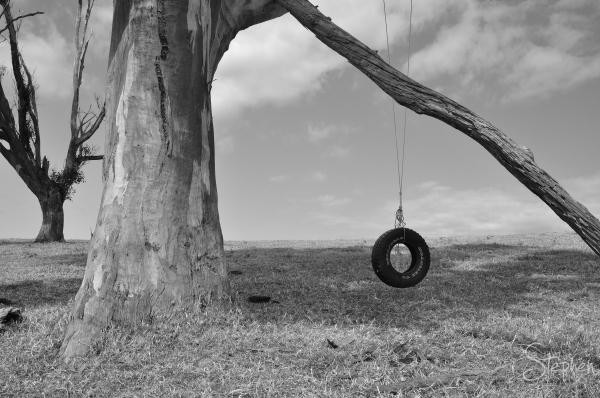 Old tyre swing beside a dirt track near Tilba