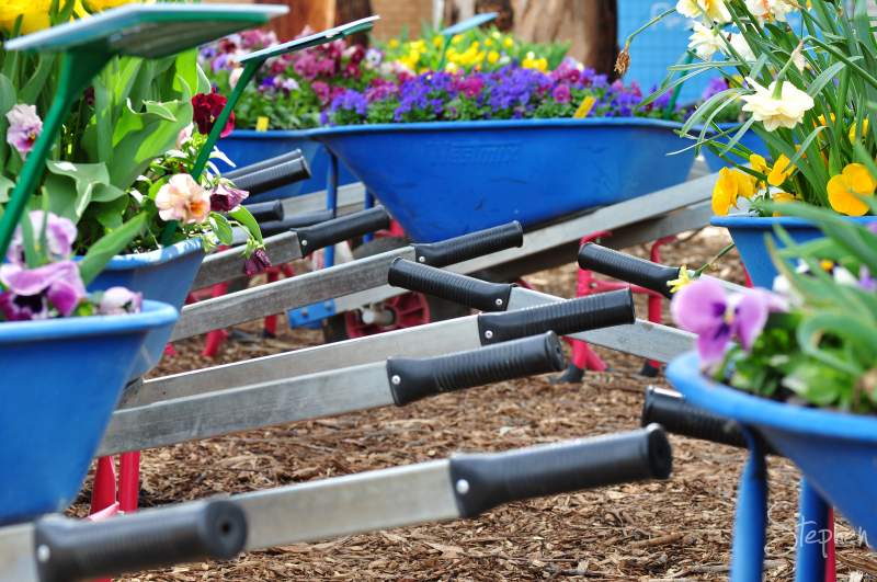 Wheelbarrow flower beds at Floriade in Canberra