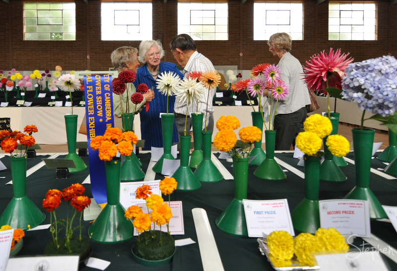 Prize winnng blooms at the Canberra Flower Show