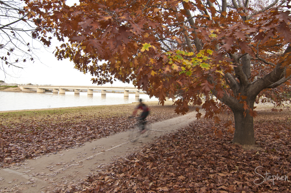 Autumn scene on the shores of Lake Burley Griffin
