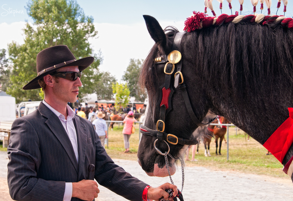 Horse and equestrian rider at Royal Canberra Show