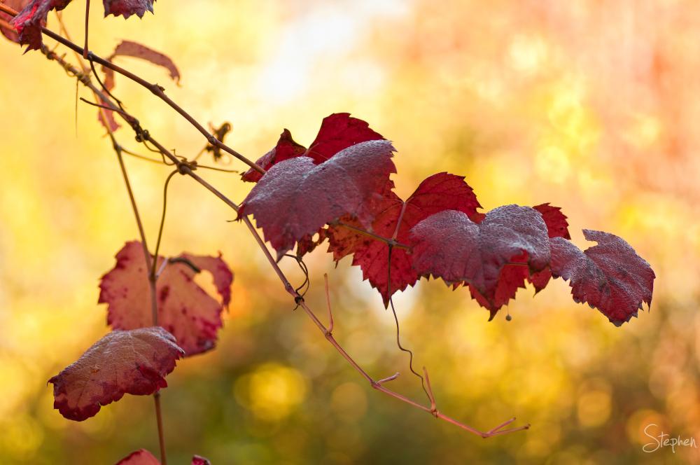 Life Happening in my autumn garden