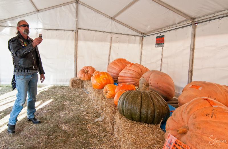 Pumpkins at Collector Villiage Pumpkin Festival
