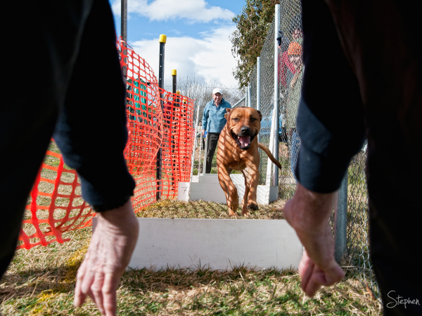 The Doggie Olympics at the RSPCA in Canberra