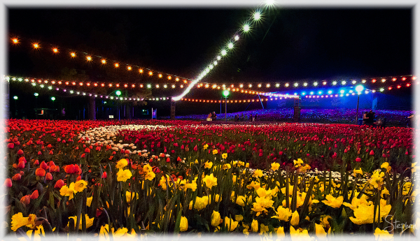 Flower beds under lights at Floriade NightFest