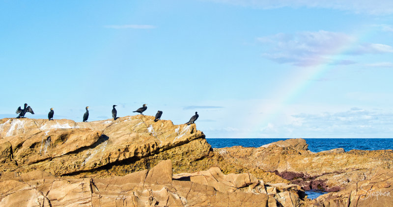 Cormorants rest on a rock after the rain
