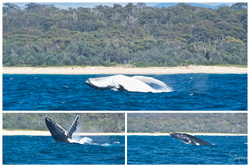 Montage of whale watching off Narooma