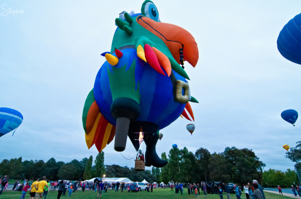 Pegleg Pete the Pirate Parrot hot air balloon