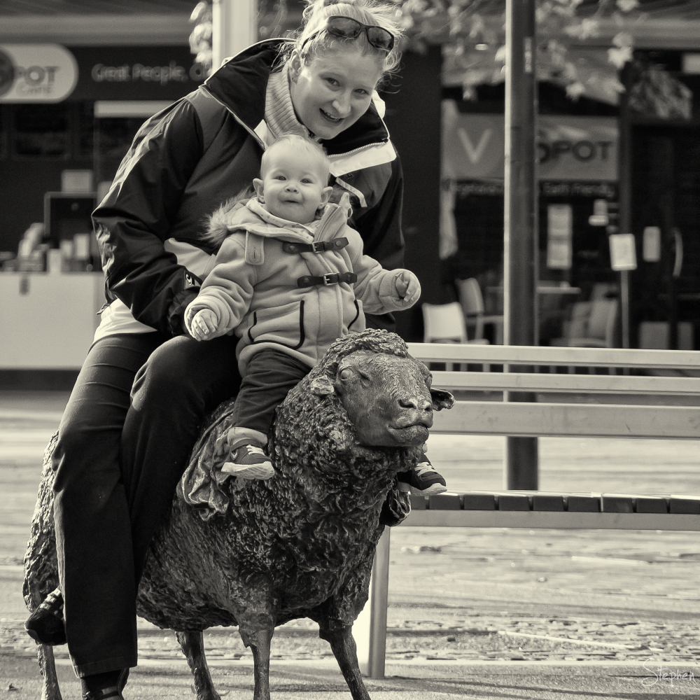 Popular public art sheep sculpture in Petrie Plaza