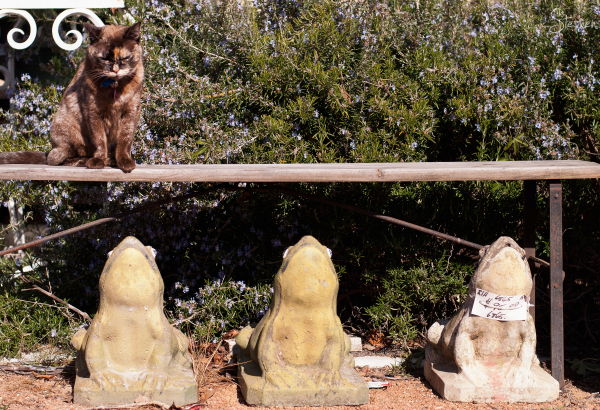 Cat and frogs at Village Antiques in Bungendore
