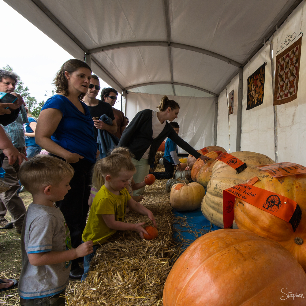 Giant pumpkin awards at Collector Pumpkin Festival