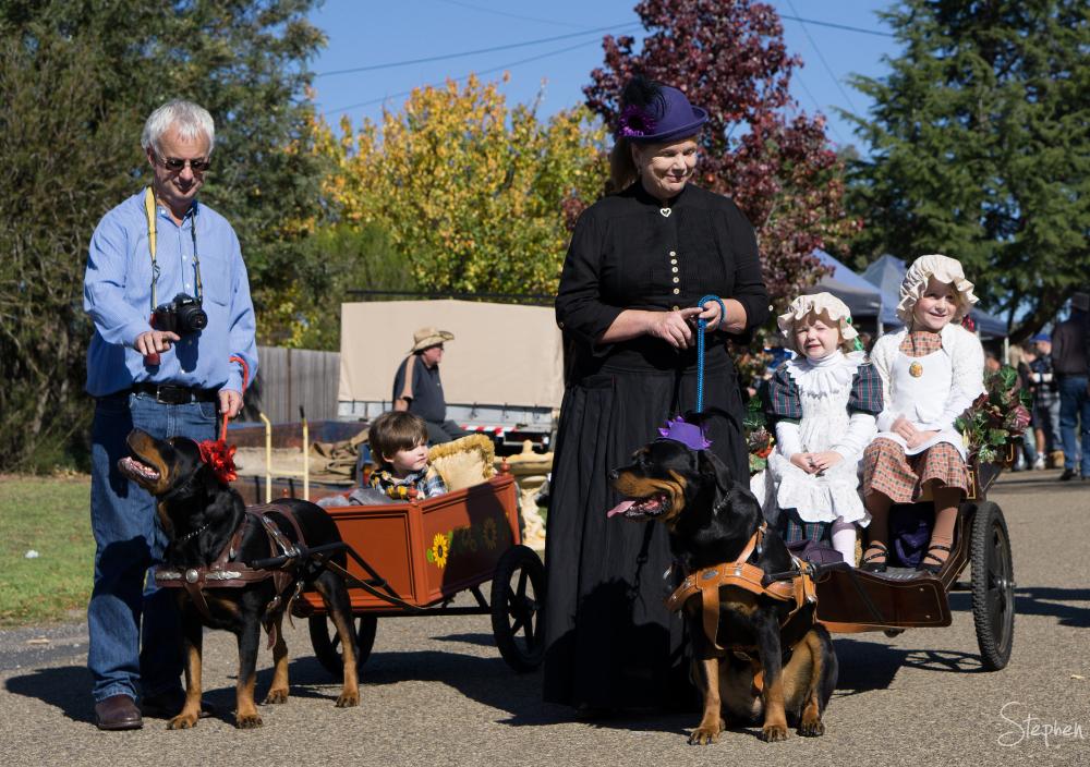 Dogs pulling wagons at Binalong Wild Colonial Day