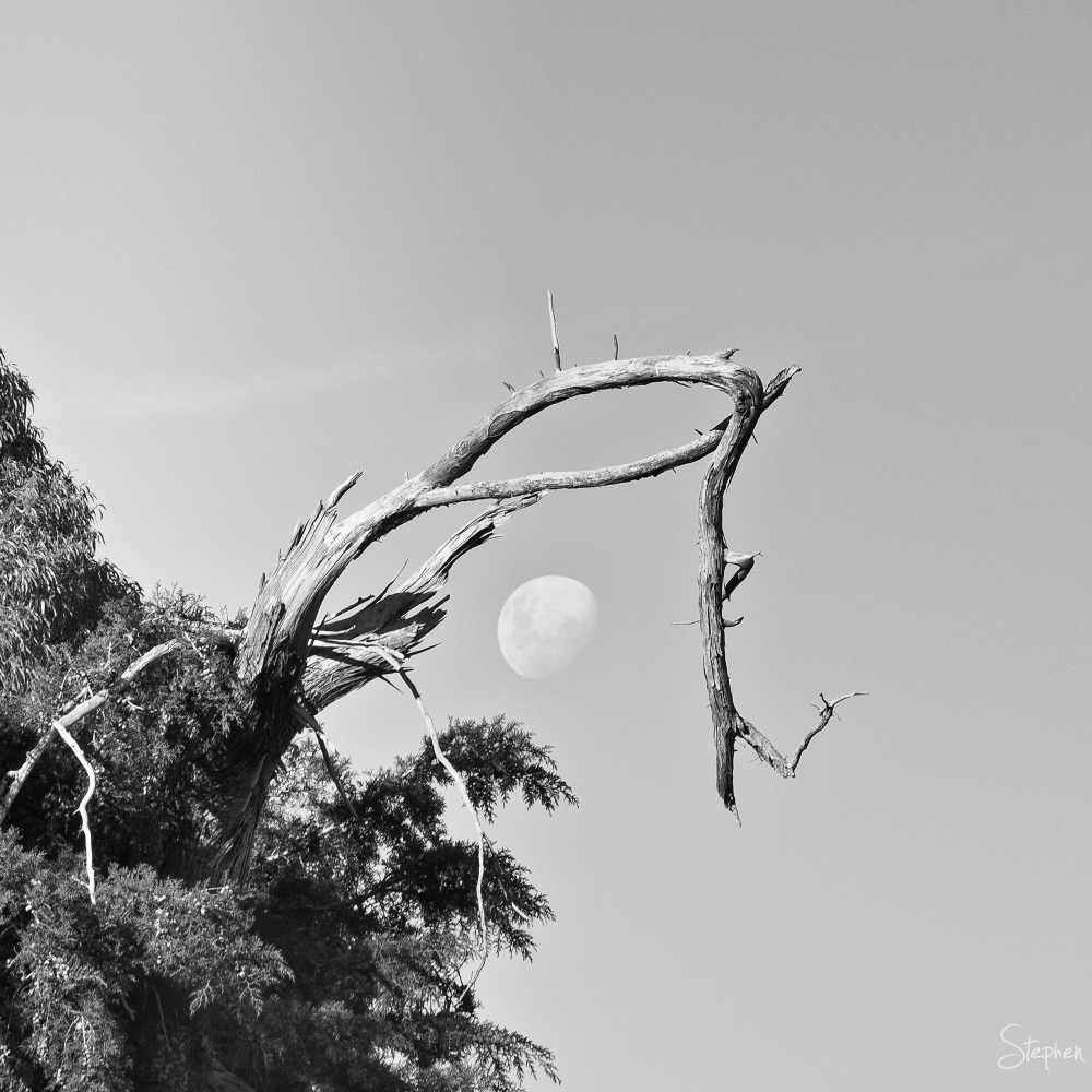 Moon framed by storm damaged tree branch