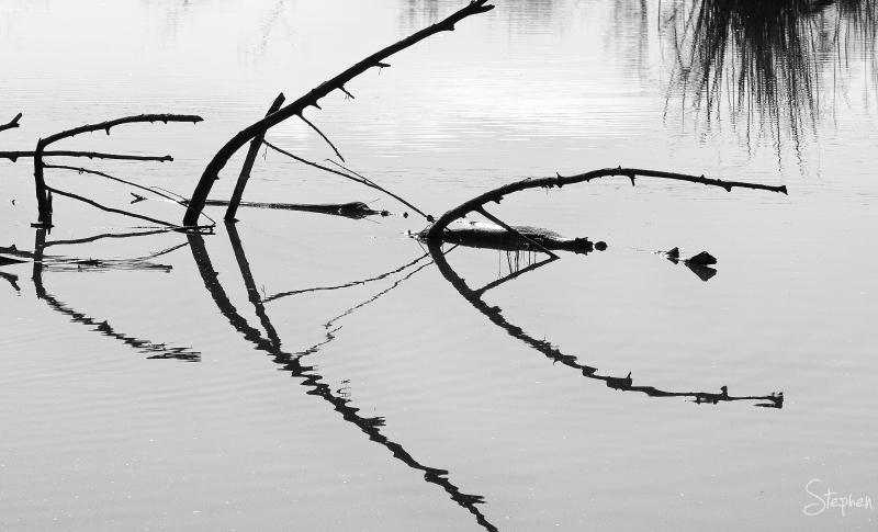 Reflections in the Jerrabomberra Wetlands