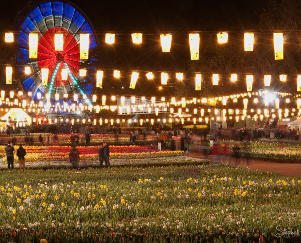 Floriade festival lights up for NightFest