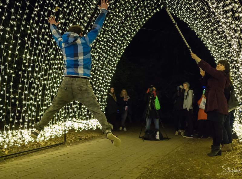 Lighting feature at Floriade NightFest
