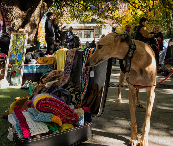 Greyhound at New Acton suitcase rummage market