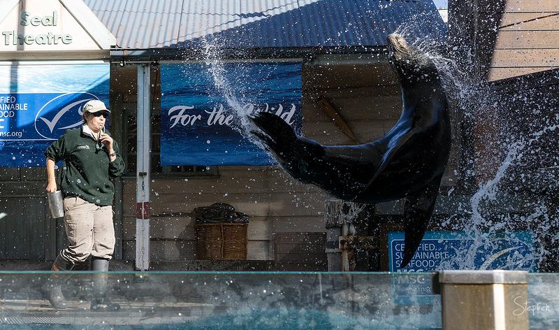 Seal Theatre at Taronga Zoo
