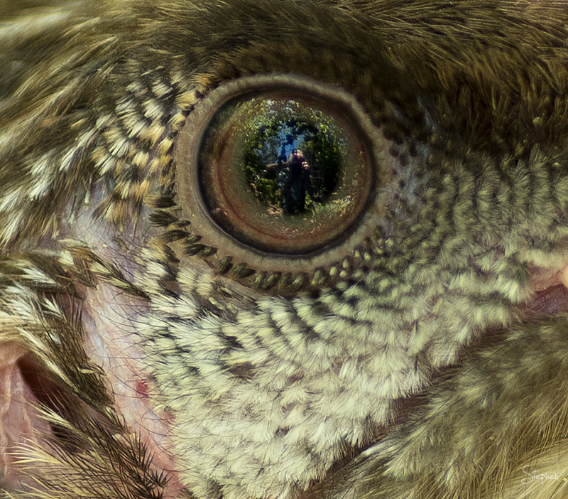 Self-portrait reflected in bird